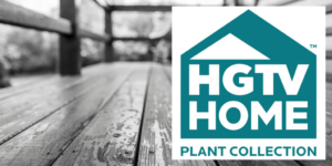 HGTV Home Indoor Plant Collection
